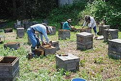 千曲川沿い養蜂風景