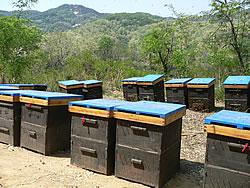 中国山東省の養蜂