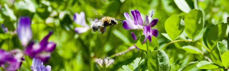 レンゲ蜂蜜