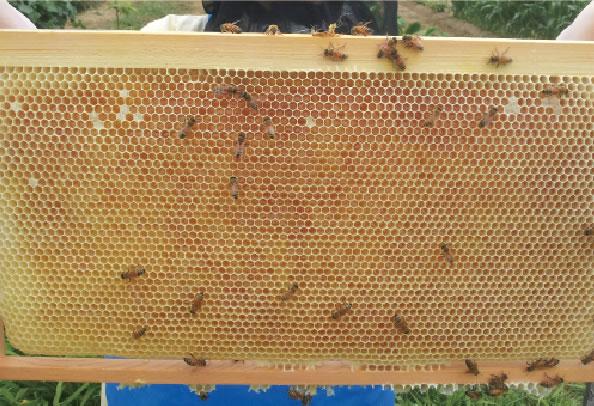 濃縮ハチミツ